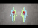 How Your Body Knows Left From Right