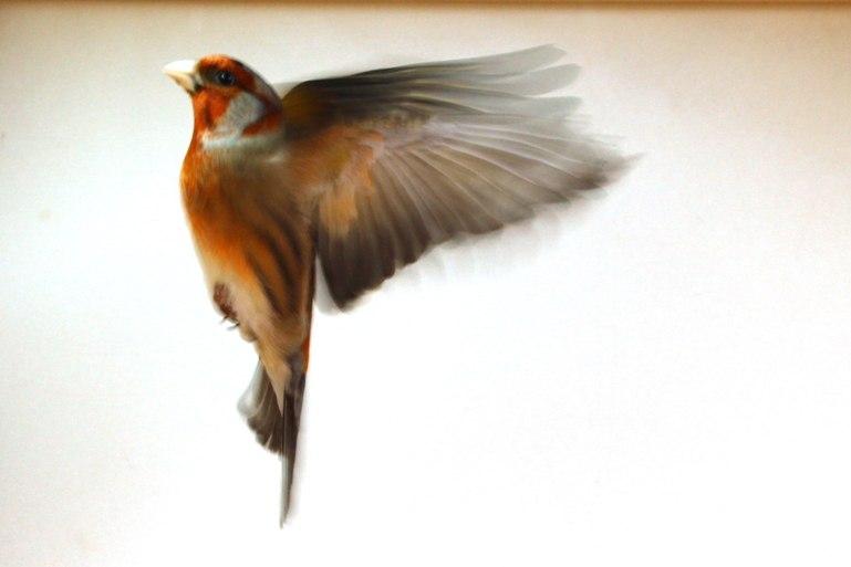 Фотографии моих птиц  2H_WeBhNOak