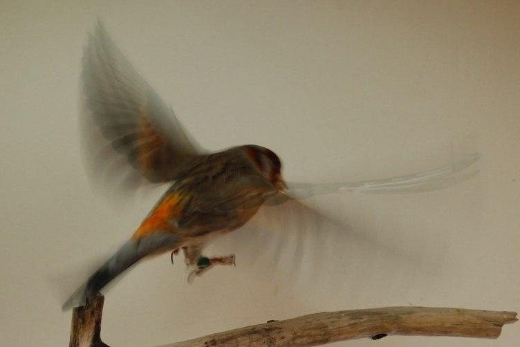 Фотографии моих птиц  JXIiiXIUGpI