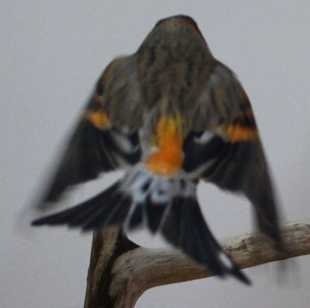 Фотографии моих птиц  OuUG5erxOi0