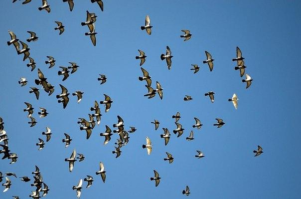 Türkiye Kuş Konferansı Ne Zaman