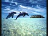 Dj Slon &amp Ангел А - Дельфины