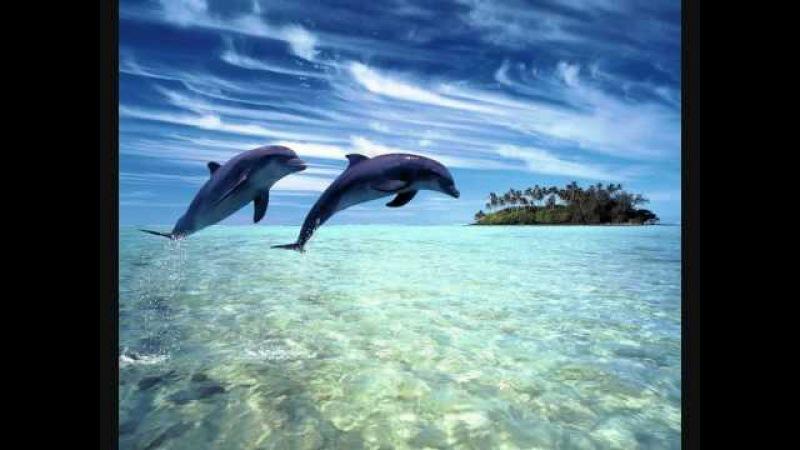 Dj Slon Ангел А - Дельфины