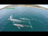 Rare Twin Whale Calves Seen off Dana Point by Whale Watching Boat