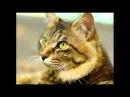 топ 10 самых хитрых животных в мире