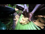 Индонезия. Экспедиция в джунгли острова Новая Гвинея. 11 серия (1080p HD) Мир Наизнанку - 5 сезон