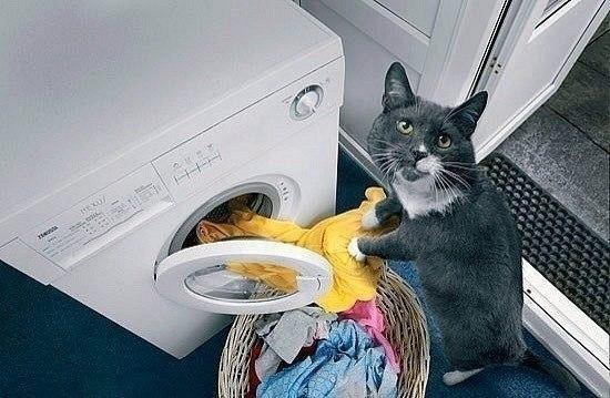 Идеальный кот для вашего дома
