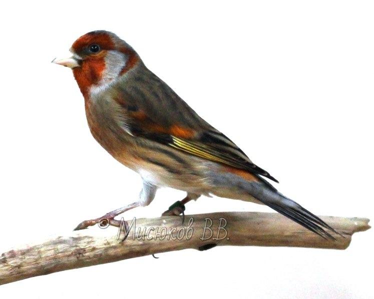 Фотографии моих птиц  W_gwiPPyj3I