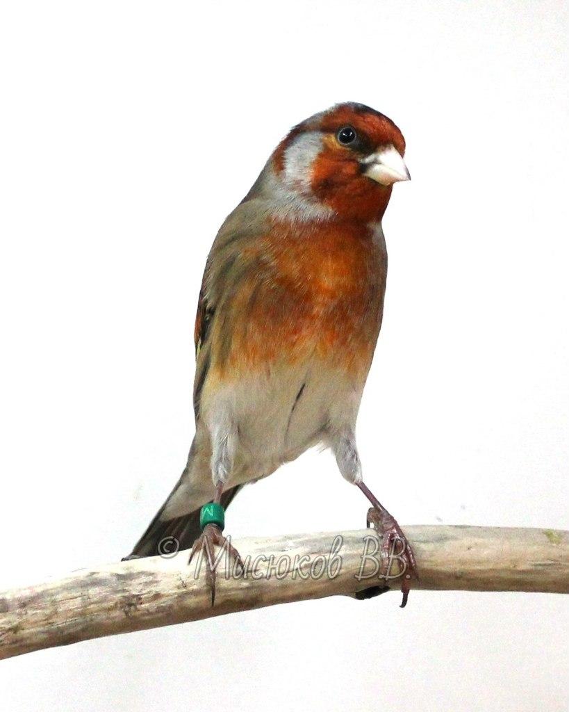 Фотографии моих птиц  ZHEk2qZryvk