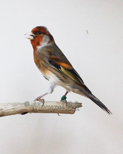 Фотографии моих птиц  LEovAhNQyvU