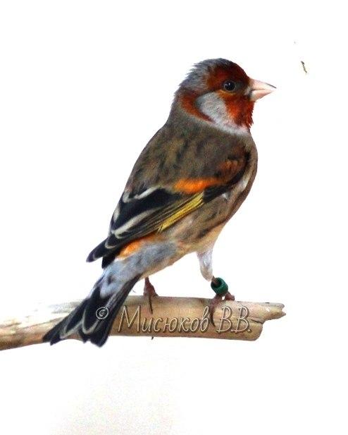 Фотографии моих птиц  S4_eBpDMfm4