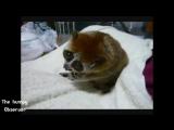Нереально милое видео про животных.