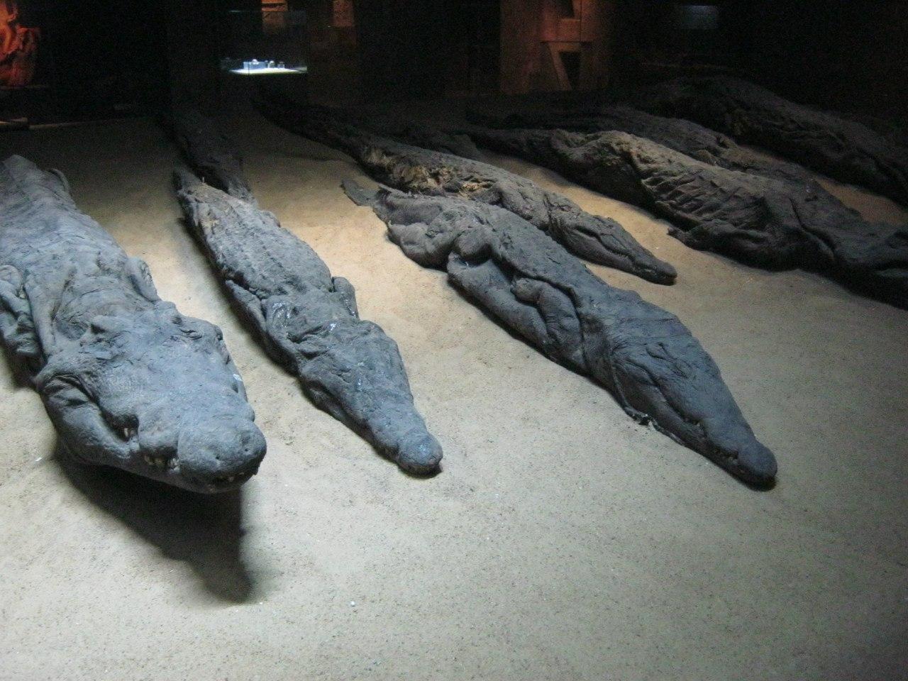 """Мумифицированные крокодилы в """"музее мумификации"""""""