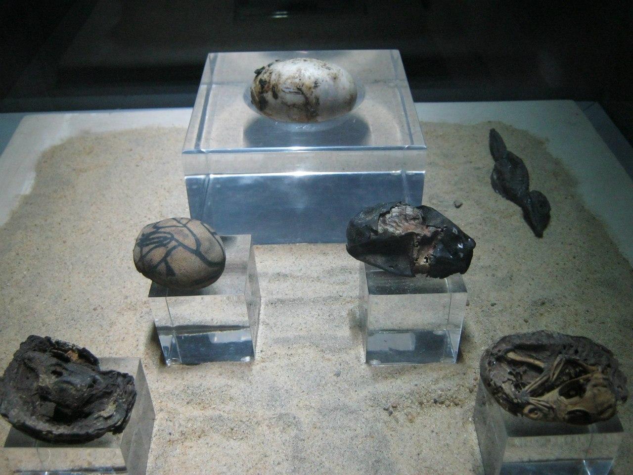 """Мумифицированные крокодиловые яйца в """"музее мумификаций"""" при храме Ком Омбо"""