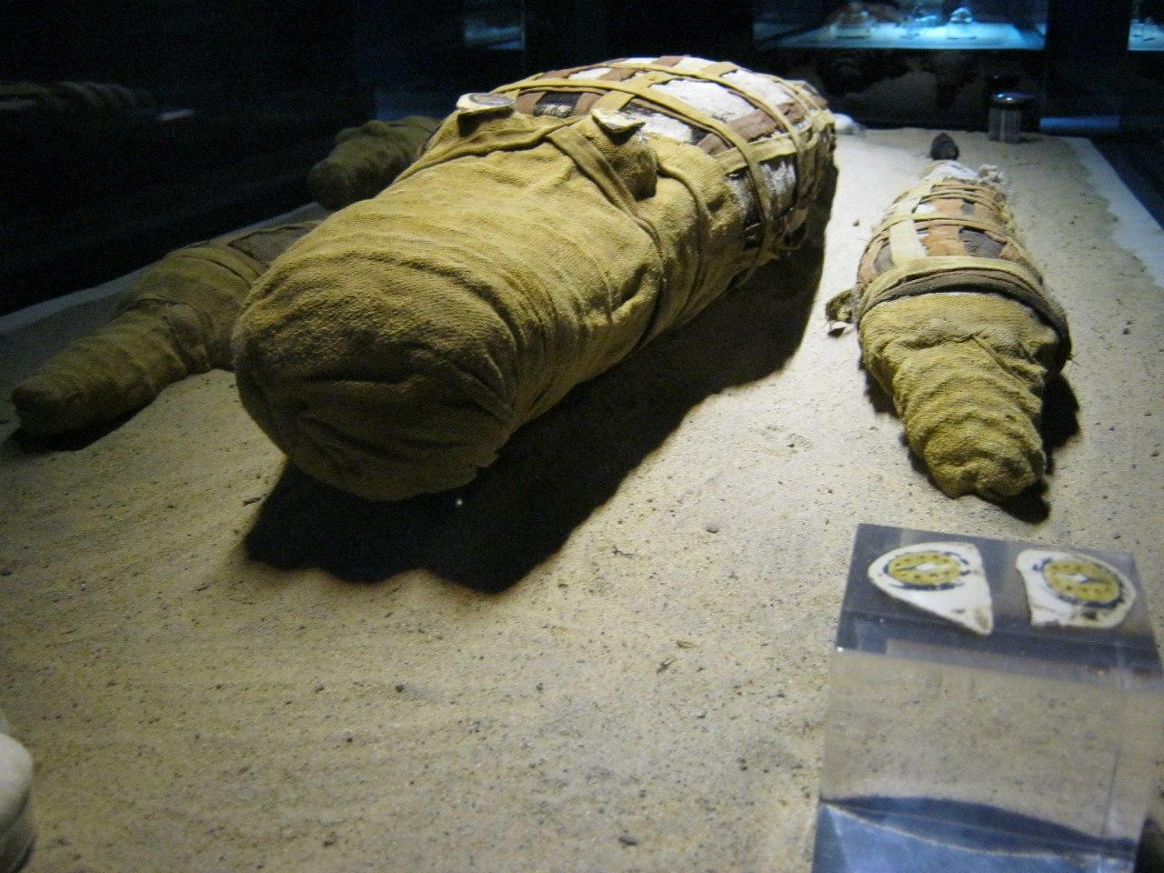 """Мумифицированные крокодилы в """"музее мумификаций"""" (при храме в Ком Омбо)"""