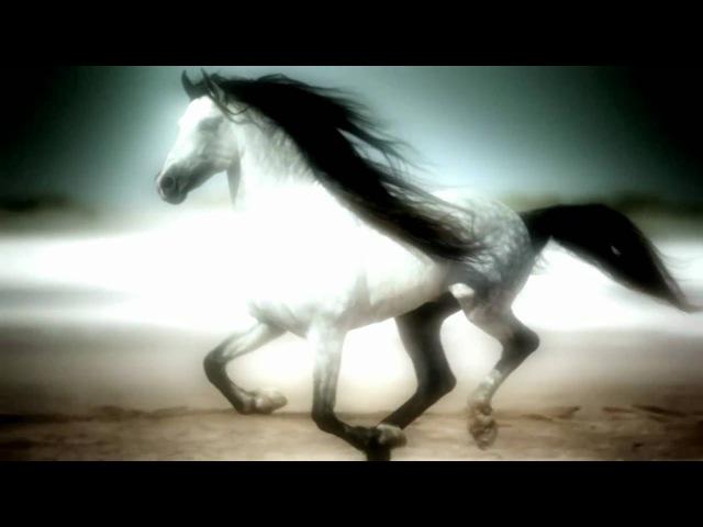 Richard Wagner - Siegfried Funeral March (HD)