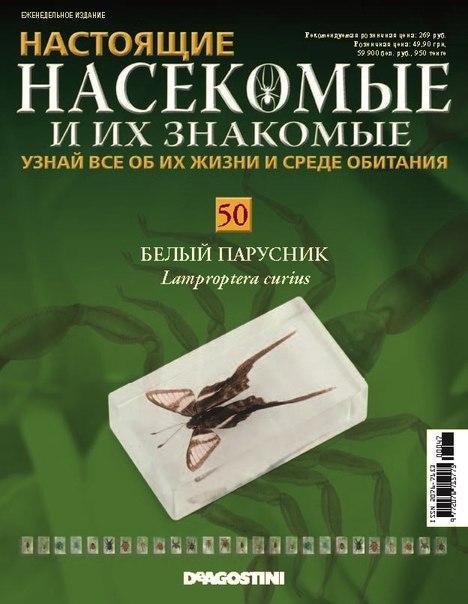 Насекомые №50 - Белый парусник (Lamproptera curius)