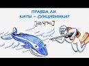 Правда ли киты – суицидники — Научпок