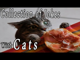 Collection jokes with cats [Cats thieves] Коты Воры! Подборка приколов 2016