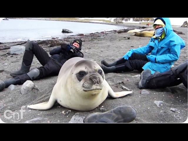 INCREDIBLE Encounter with Friendly Baby Elephant Seal [EXTENDED CUT]