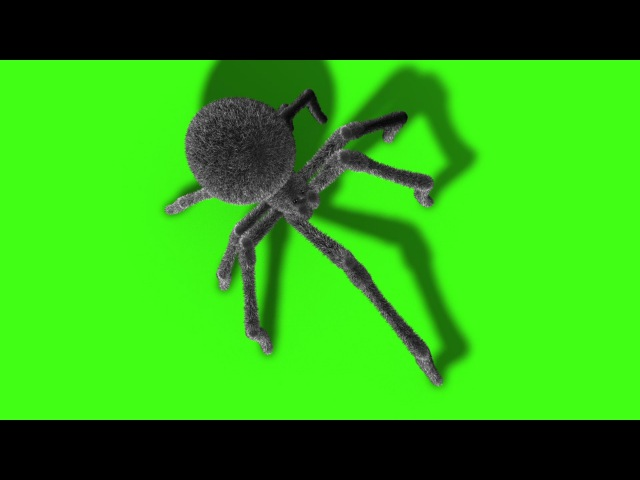 Green Screen Arachnid Black Widow Spider Invasion - Footage PixelBoom