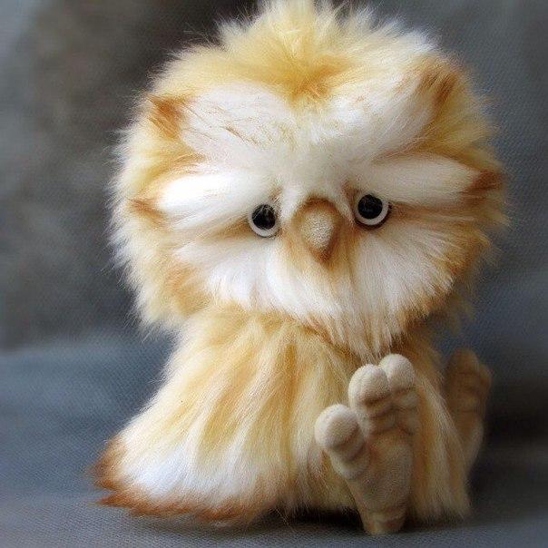 Совенок, маленький пушистый друг (1 фото) - картинка