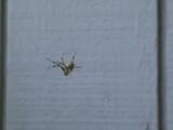 Прикол с пауком.