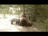 медвежья вечеринка