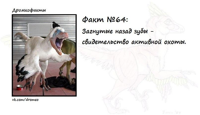 https://pp.vk.me/c623617/v623617874/131aa/fIt06SNu6CQ.jpg