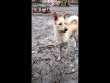 собака хуяка