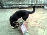 собака учится кататься на скейте