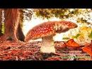 Androcell Fungus Garden