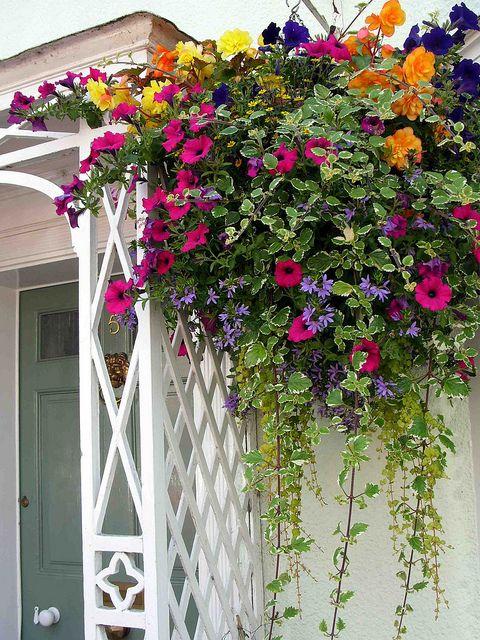Как цветы сажать в подвесные кашпо на улице 876