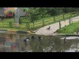Птицы купаются в луже, к жаркой погоде
