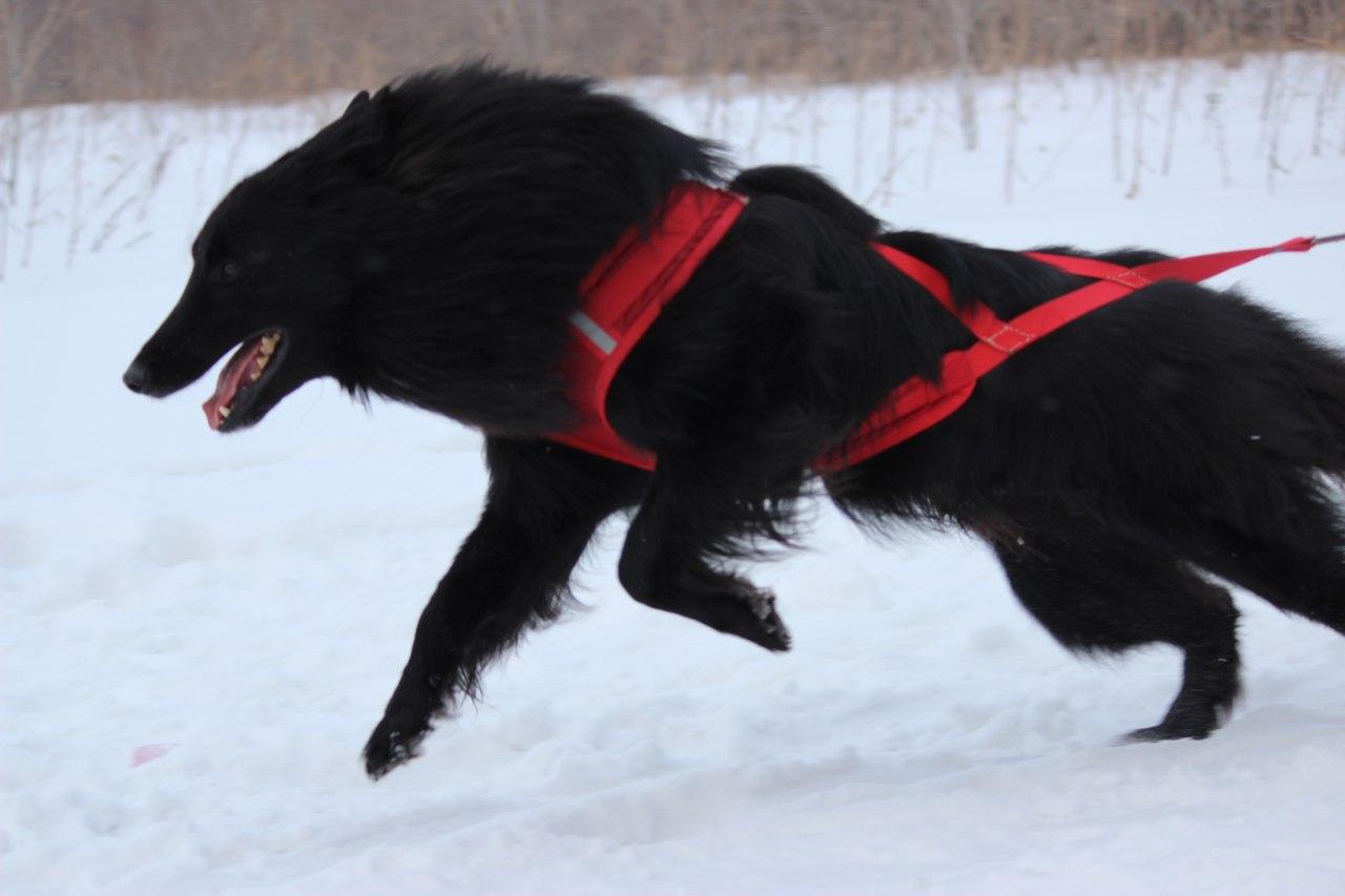 21 февраля 2015 года КУБОК РОССИИ (2 этап) по зимним дисциплинам кинологического спорта. г. Омск 3O-Vu-RZic0