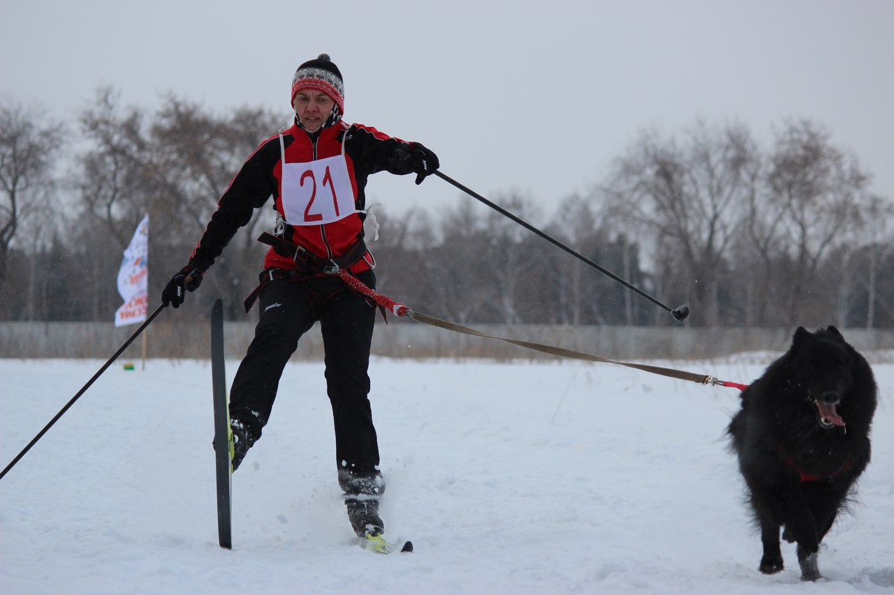 21 февраля 2015 года КУБОК РОССИИ (2 этап) по зимним дисциплинам кинологического спорта. г. Омск E3DYnRQDW-8