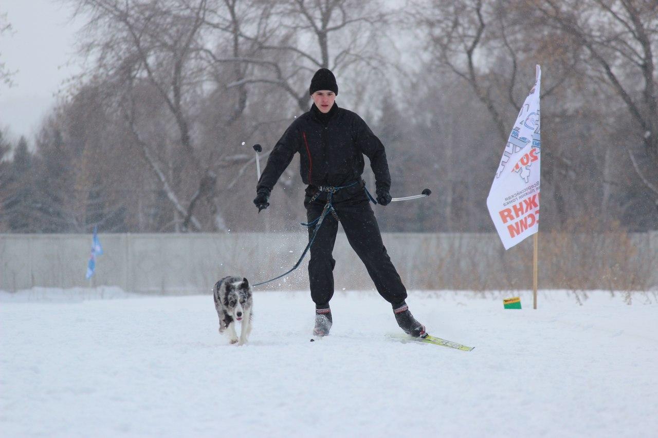 21 февраля 2015 года КУБОК РОССИИ (2 этап) по зимним дисциплинам кинологического спорта. г. Омск 7hAtvyKZ86A