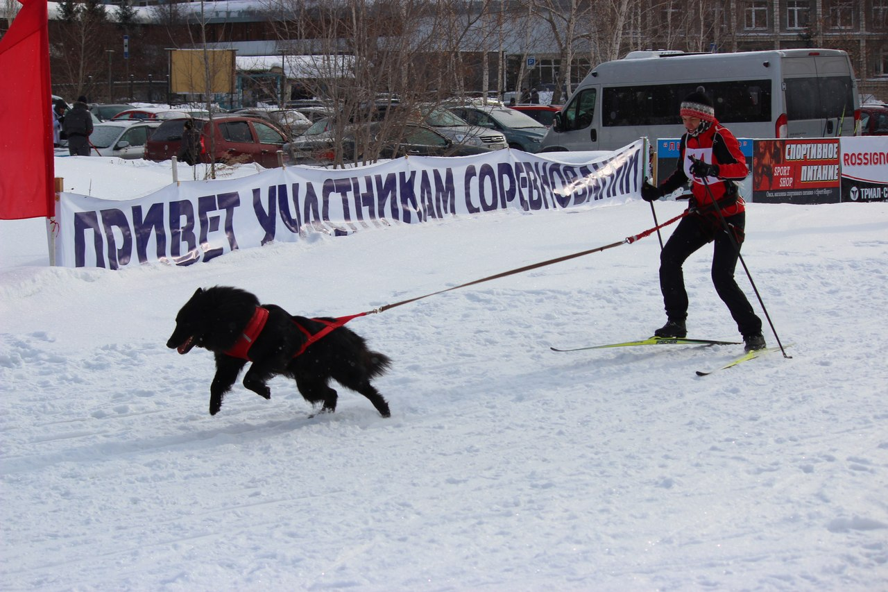 21 февраля 2015 года КУБОК РОССИИ (2 этап) по зимним дисциплинам кинологического спорта. г. Омск JR3Ub8yJ5t4