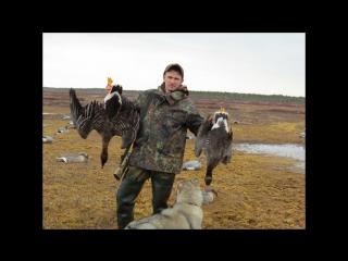 Охота на гуся 2015 (весна)