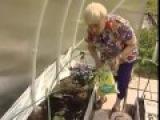 Г КИЗИМА ОГОРОД БЕЗ ХЛОПОТ Часть 5 Посадка помидор ПОСОБИЕ ДЛЯ РАЗУМНО ЛЕНИВЫХ!  YouTube