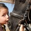 Конные прогулки для взрослых и детей  в  пгт. Во