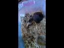 Укус медноголового щитомордника