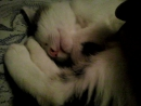 спят усталые игрушки. и котята тоже спят. на фиг ваши все игрешки. не будите вы котят.