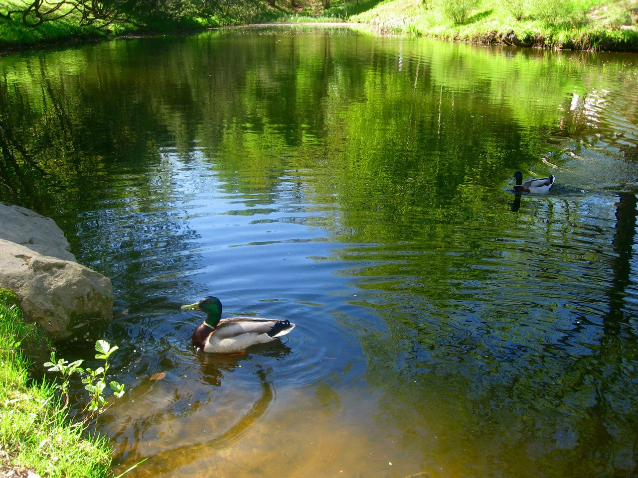 У всіх водоймах Львова — критично забруднена вода