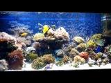 скачать фильм коралловый аквариум
