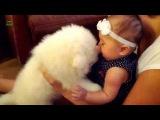 Приколы с животными и детьми / ★ 2013 - 2014