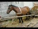 запрягаем лошадей