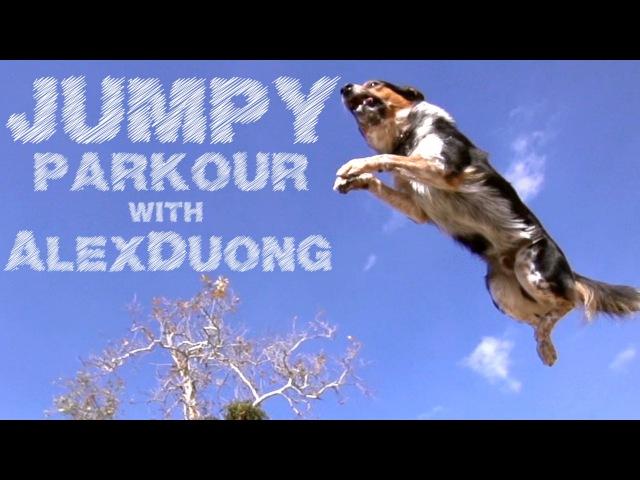 Alex Jumpy - The Parkour Dog