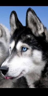 Собаки 6