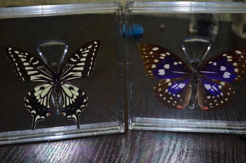 Собери свою коллекцию. Бабочки - ДеАгостини - тест